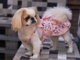 """Зоосалон """"Mister Dog"""" предлагает парикмахерские услуги для животных! 150 лей"""