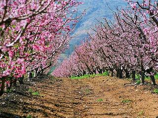37 hectare consolidate Ungheni