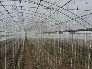 Se vinde afcere in agricultura modul sau bloc de sera solar  teplite din fier zincat