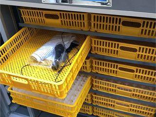 Incubator 528 ouă automat industrial HHD 528  Va oferim in credit  livrare gratuita +garantie
