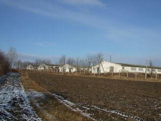 Ferma vaci,oi,pasari -3 grajdur de1800m, 3.2 ha ter.aferent,posib. contractat700ha-agric.