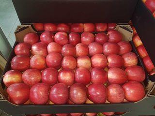 Frukte- фрукты