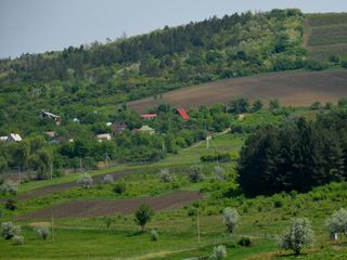 Sector linga padure,traseul Chisinau-Orhei.
