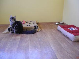 Квартирная передержка для кошек и собак, птиц, грызунов и других животных