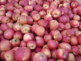 продам яблоко свежее 2й 3й сорт