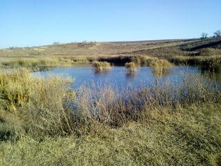 Сдам два озера в аренду на 30 лет.Цена за два озера 5000 лей в год(3000 лей в год, зразу за 30 лет).