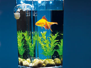 Аквариум самоочищающийся My Fun Fish !!!