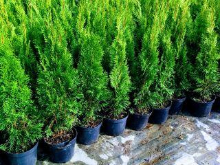 Plante decorative !!!