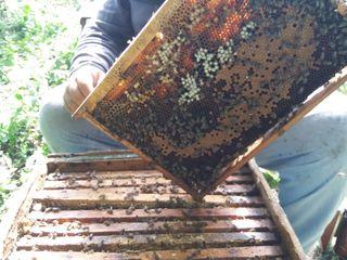 Продам пчёл.