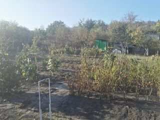 12 Ari de Constructie in Tovarasia Pomicola din Satul Cimiseni
