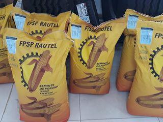 "Seminte de porumb! P461 P457 P458, Producator:FPSP ""Rautel"" (Balti)"