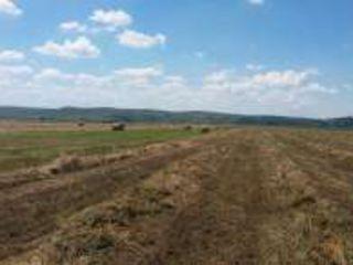 Teren agricol -11,015 hectare Земленои участок! Lot de pamint arabel.(-orhei-nistreana )