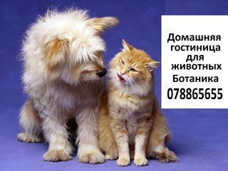 Hotel for Dogs and Cats .Домашняя гостиница