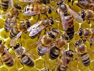 Familii de albini si utilaj apicol cu achitarea in rate.