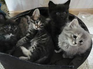 Раздаем котят, родились 1 мая.