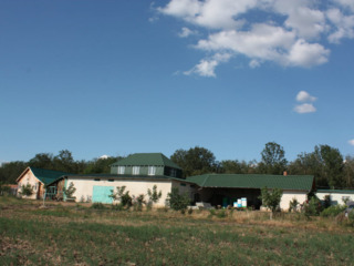 Vinzare arenda (-+25 ani)gospodarie si padure privata de salcim ранчо rancho