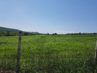 Se vinde teren agricol / продается сельскохозяйственная земля