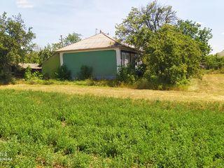 Vând gospodărie în satul Pivniceni