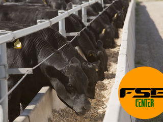 Ферма по откорму бычков: ваш проект - наши инвестиции!