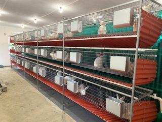 Custi pentru iepuri la comanda foarte rapid,comode si calitative.