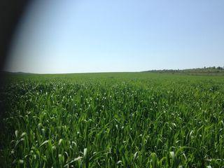 Vanzare 300 ha teren agricol