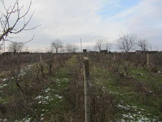 Продается 30 соток земли под строительство в центре с. Константиновка р-он Кэушень