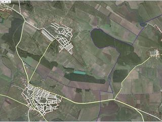 Ореховая плантация  на севере молдовы сдается в аренду