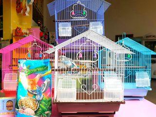 Волнистый попугай с готовым набором (papagal cu set complet)