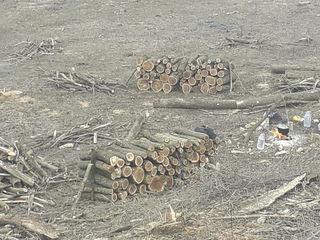 Lem de foc specii tare