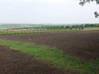 Teren agricol Visoca, Soroca