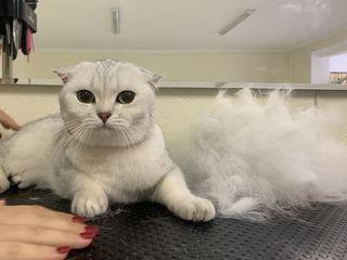 Купание 150 и стрижка 200 котиков