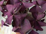 Flori de camera
