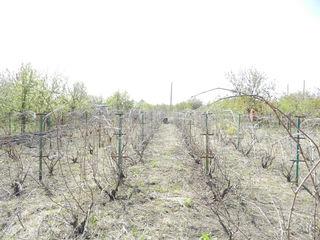 Se vinde lot pomicol 12 ari, Mereni, r-l Anenii Noi, 11 km din Chișinău