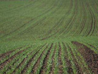 Vind teren agricol la pret mic!