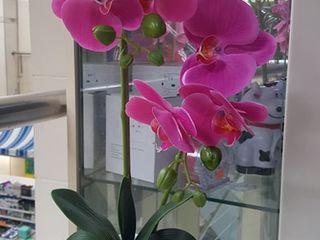 Орхидеи искусственные в вазоне 300 лей.