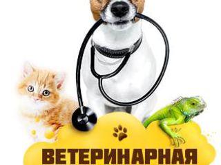 Clinica si farmacie veterinara Iurionvet
