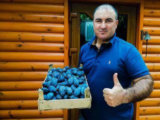 Pomi fructiferi - prun Stenlei ...