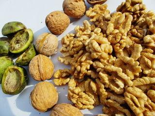 cumpar miez de nuca куплю орехи