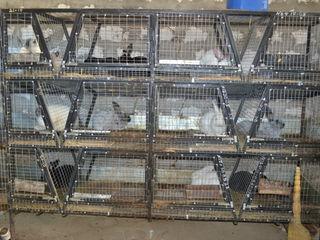 vInd custi din metal pentru cresteria iepurilor