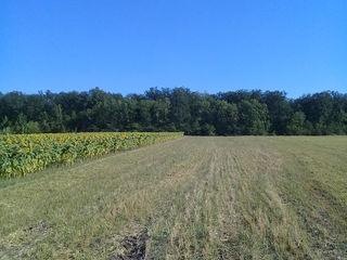 vind pamint agricol 45 ari Peresecina nu departe casa padurarlui 5 minute pina la trasa centrala M2.