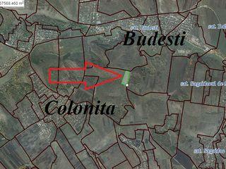 Vinzare teren agricol 62 Ha Colonita