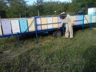 Polenizarea gradinelor. Предлагаем пчел для опыления садов, полей, рапса. Цена договорная.