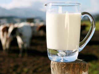 Cumpărăm Lapte în Cantități Mari !