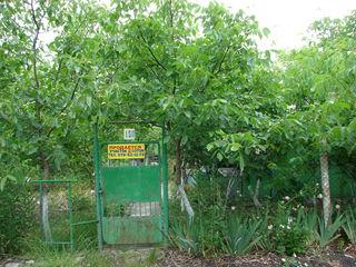 продаю дачный участок, 17 км. от Кишинёва, 14 соток земли