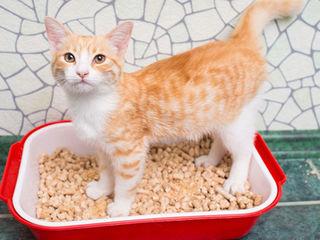 Древесный наполнитель для кошек и собак / umplutură de toaletă din lemn