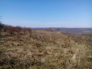 Возле  леса  срочно  4  га земли  в аренду с выкупом