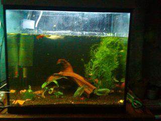 Продаю 2 аквариума недорого