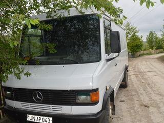 Mercedes rex