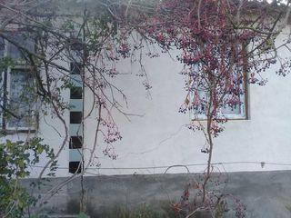 Vind casa urgent in r. Causeni sat.Ursoaia...
