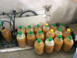 Осенняя ферментированая кукуруза (пьяная кукуруза)Для ловли крупной рыбы